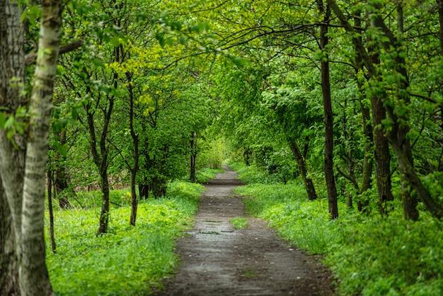 田舎の緑の木々の間の地上道路 Premium写真