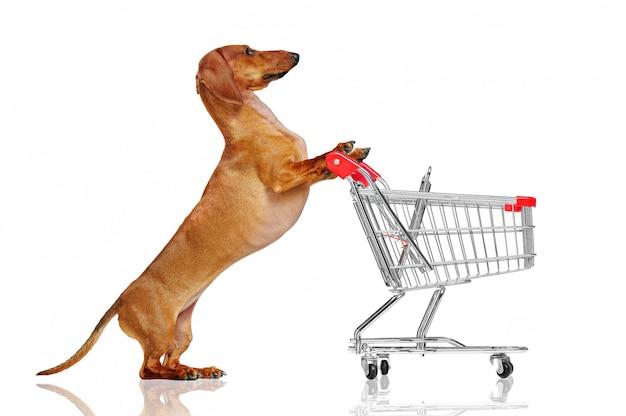 ショッピングトロリーを押すかなりダックスフント犬 Premium写真
