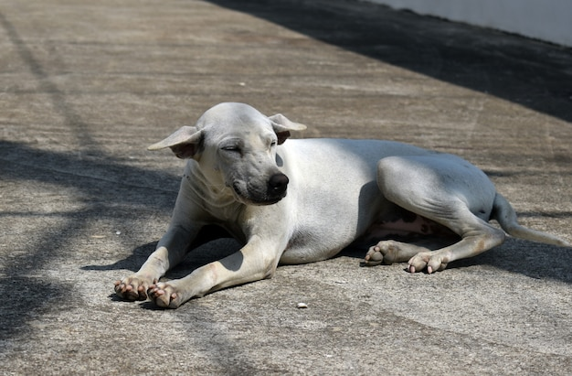 野良犬。通りの野良動物の問題。 Premium写真