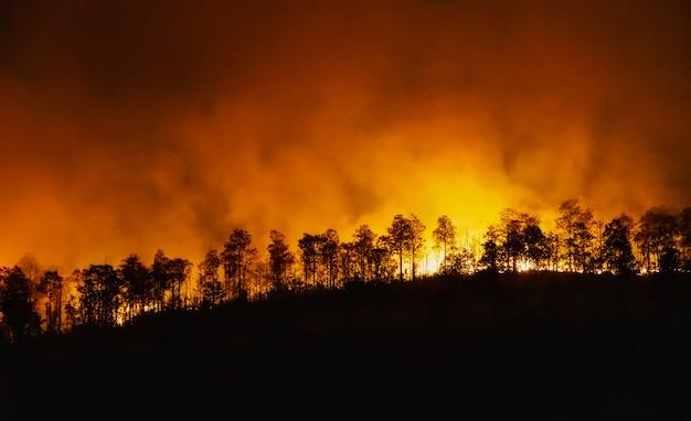 熱帯雨林の火災災害は人間によって引き起こされます Premium写真