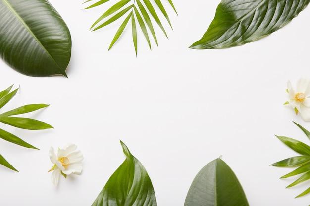 花の組成物。植物の緑の葉、シダ、白い壁のフレームに対する美しい花、プロモーションコンテンツや情報のショットの真ん中にある空白 無料写真