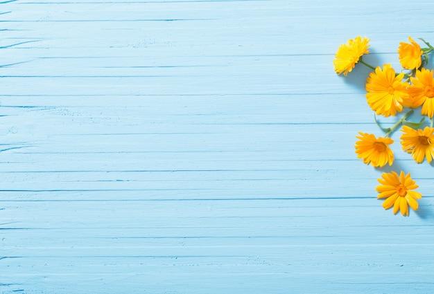 青い木製の背景にキンセンカの花 Premium写真