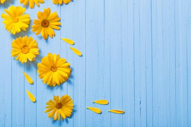 Цветки календулы на синем фоне деревянных Premium Фотографии