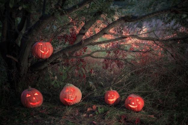 Хэллоуин тыква в ночном лесу Premium Фотографии