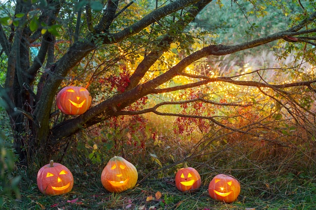 夜の森でハロウィンのカボチャ Premium写真