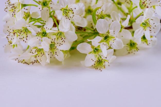 白い表面に白い花が咲く Premium写真