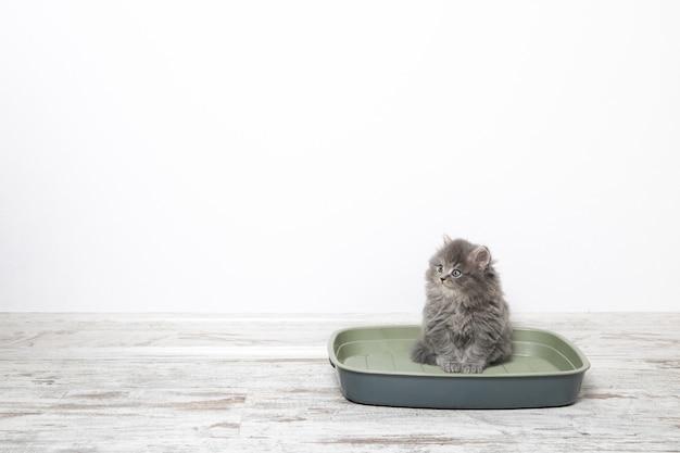 床にプラスチック製のごみ猫の小さな子猫 Premium写真