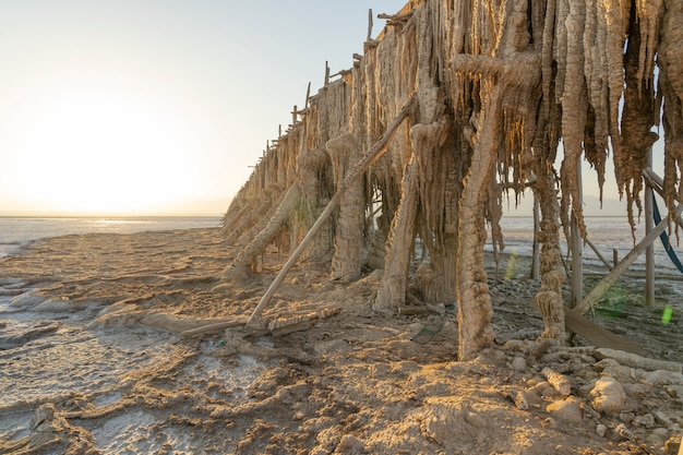 アフリカ、エチオピアのダナキルうつ病におけるアセール湖の塩原の抽出ポンプに関する塩分 Premium写真