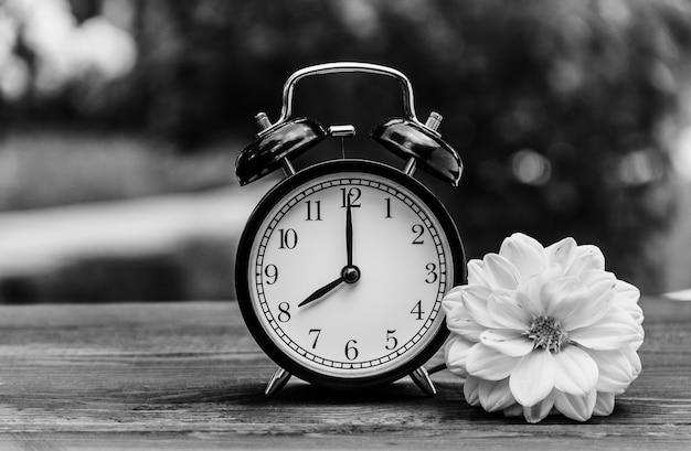 目覚まし時計と木製のテーブルのアスターの花 Premium写真