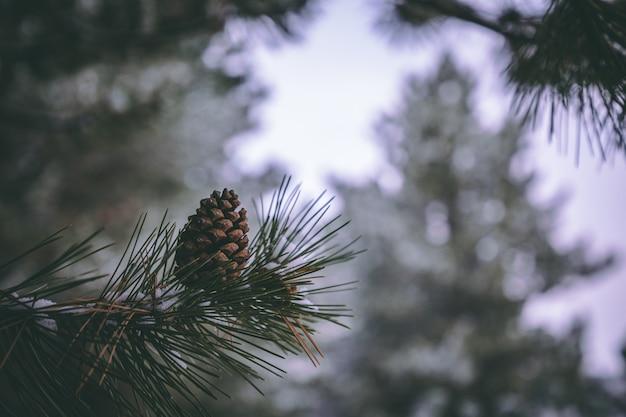 松の木のクローズアップ写真 無料写真