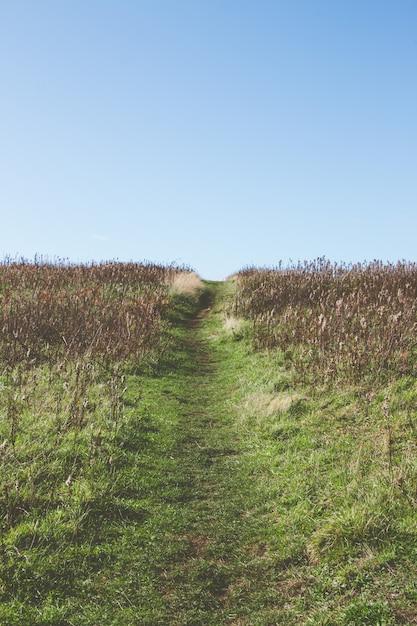 Узкая тропинка посреди травянистого поля под красивым небом Бесплатные Фотографии
