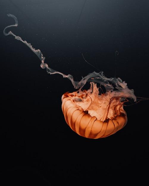 暗い海の深部に浮かぶ大きなオレンジ色のクラゲの美しいショット 無料写真