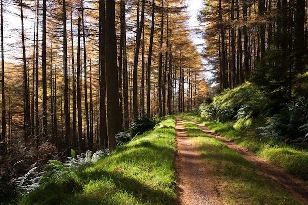 背の高い木と森の狭い泥だらけの道 無料写真