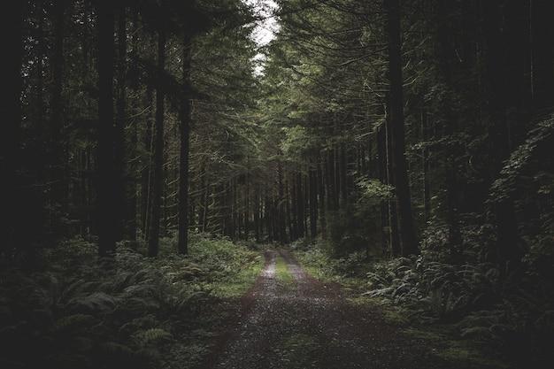 緑と少し上から来る光に囲まれた暗い森の中の曲がりくねった狭い泥だらけの道 無料写真