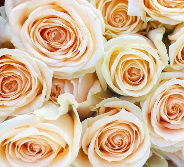光のピンクのバラのクローズアップ 無料写真