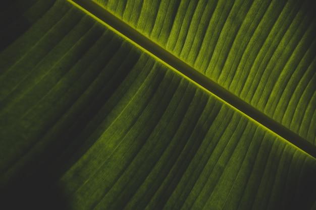 緑のバナナの葉の美しいクローズアップショット 無料写真