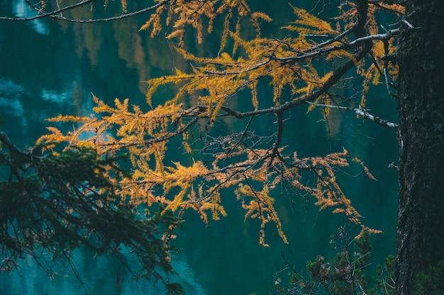 水の近くの黄色のカラマツの木のセレクティブフォーカスショット 無料写真