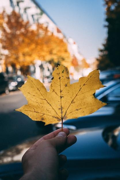 大きな黄金のカエデの葉を持っている手 無料写真