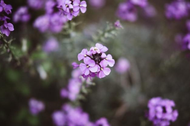 フォーカスのライラックの花の枝の美しいショット 無料写真