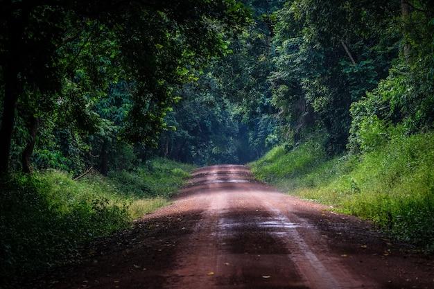 木々や植物の森の真ん中にある未舗装の道路 無料写真