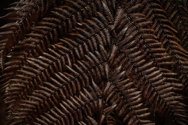 茶色の秋のシダの葉のクローズアップショット 無料写真