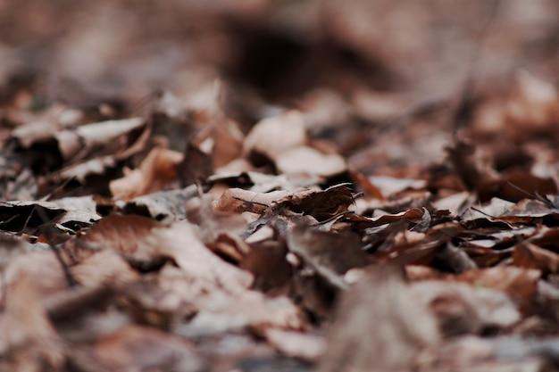 Крупным планом селективный фокус выстрел из сухих опавших осенних листьев Бесплатные Фотографии