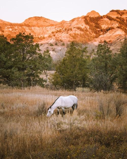 背景の山と乾いた草原の白い馬の垂直ショット 無料写真
