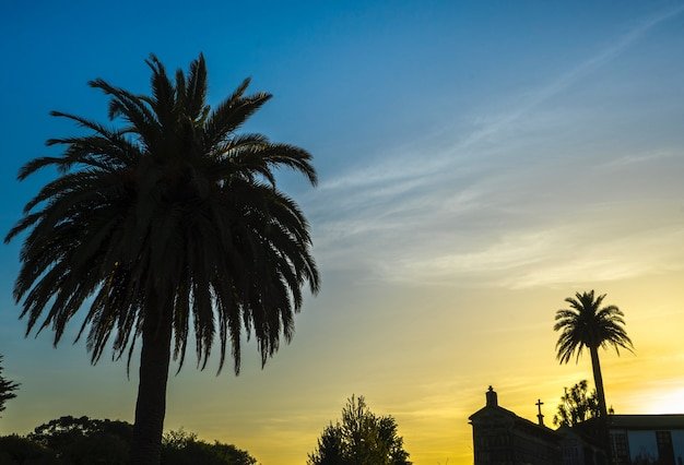 Красивый снимок деревьев атталеи с церковью на расстоянии под желто-голубым небом Бесплатные Фотографии