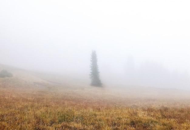 Красивая съемка сухого травянистого поля с деревом в тумане Бесплатные Фотографии