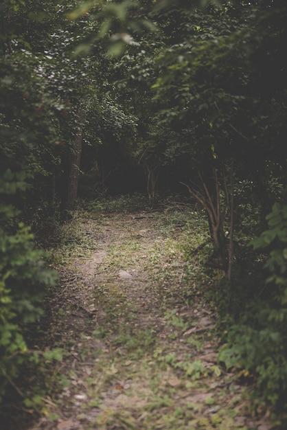 Вертикальная съемка пути в середине леса с зелеными лиственными деревьями Бесплатные Фотографии