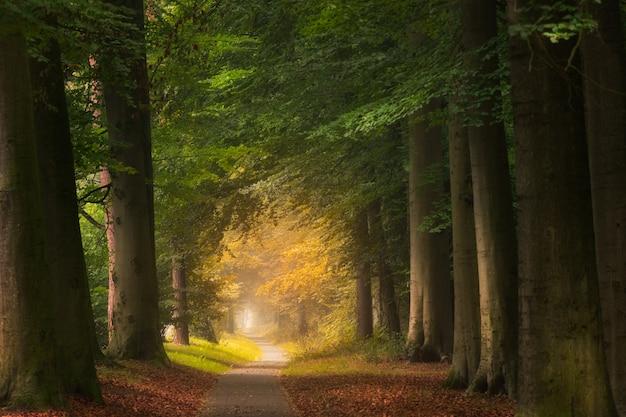 大きくて緑の葉のある木がある森の真ん中の経路 無料写真