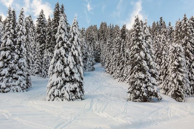 木でいっぱいの美しい雪に覆われた丘 無料写真