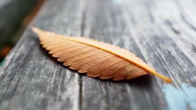 公園の木の表面に秋の葉 無料写真