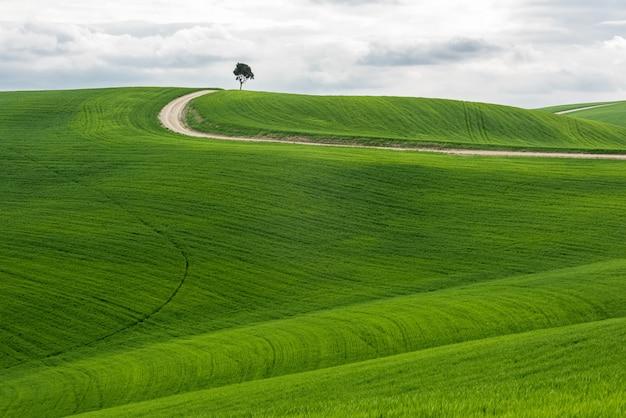 曇り空の下の経路と緑のフィールドで分離された木の水平ショット 無料写真