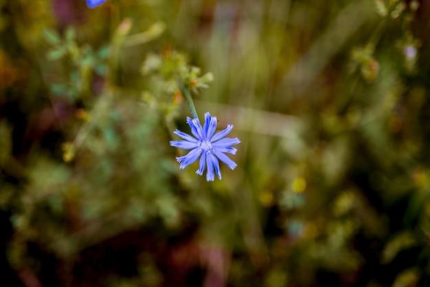 Макрофотография выстрел из маленького голубого цветка с размытым естественным фоном Бесплатные Фотографии