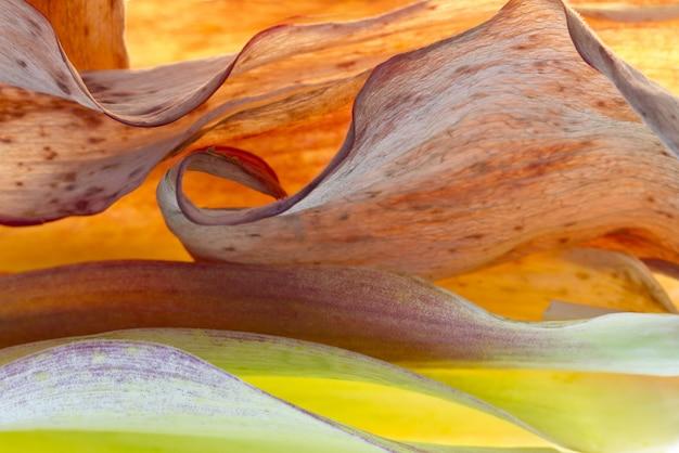 昼間の茶色と緑の葉のクローズアップショット 無料写真