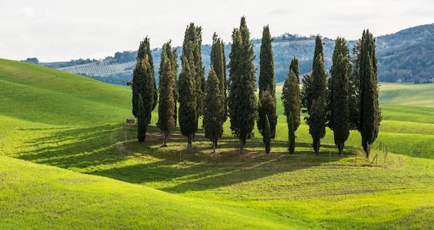 昼間は緑の野原で背の高い木の美しい範囲 無料写真