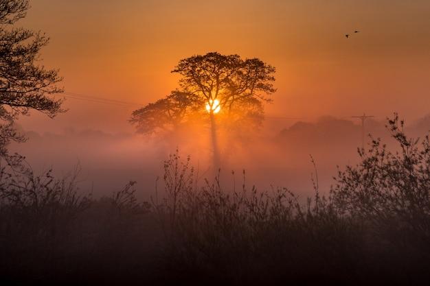素晴らしい森と夕日 無料写真