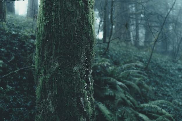 憂鬱な霧の神秘的な森の美しい風景 無料写真