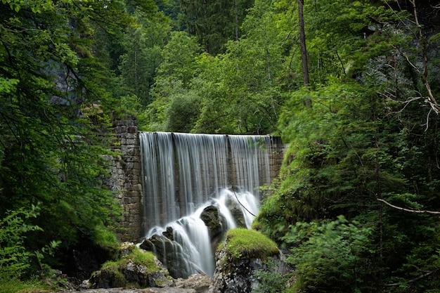 緑の葉と木々や森の植物に囲まれた滝の美しいショット 無料写真