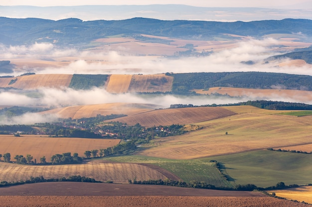 農村地域における美しい黄色の芝生フィールドの風景ショット 無料写真