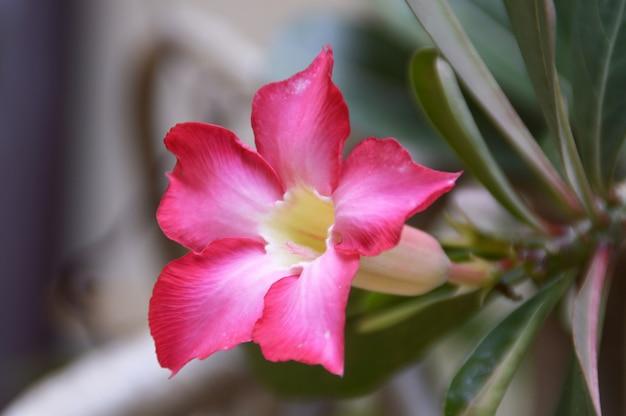 ピンクの蘭の花 無料写真