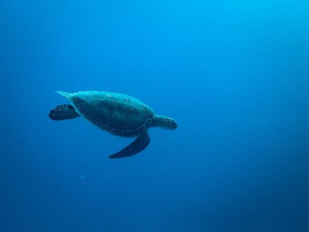 海の下を泳ぐカメ 無料写真