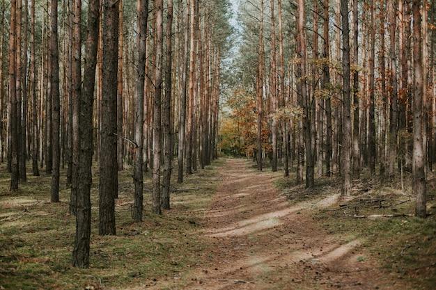 秋のトウヒのモミの森の真ん中にある無人の小道の美しいショット 無料写真