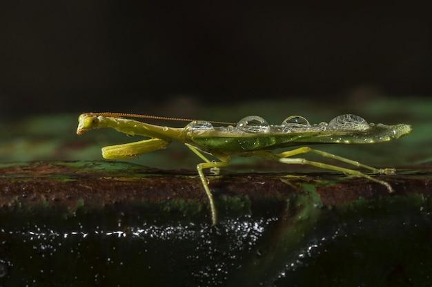 自然環境における緑色の翼を持つ昆虫のセレクティブフォーカスショット 無料写真