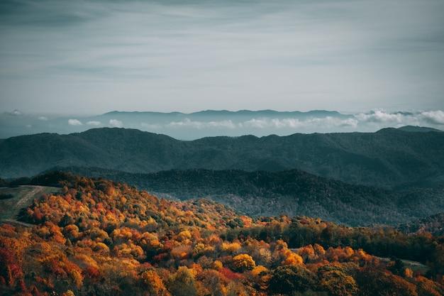 憂鬱な空の下でカラフルな秋の森のハイアングルショット 無料写真
