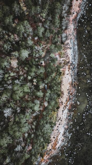 Вертикальная антенна вождения автомобиля в лесу, окруженном высокими деревьями Бесплатные Фотографии