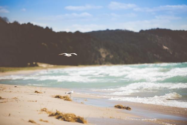 昼間で背景をぼかした写真をビーチ海岸のカモメの美しいショット 無料写真