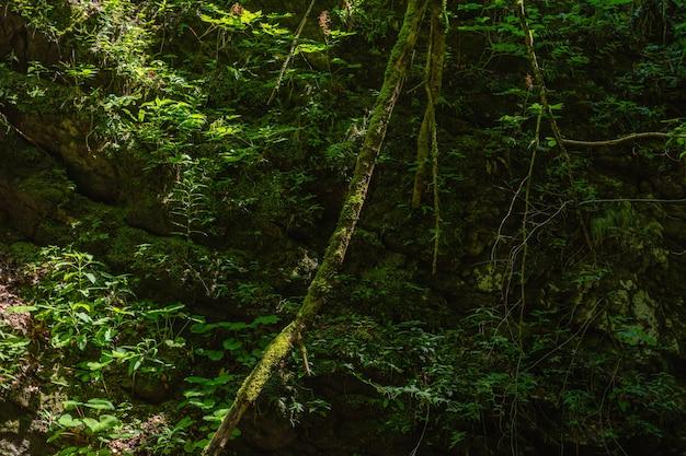 クロアチアのスクラード自治体の森のクリーパーのクローズアップショット 無料写真