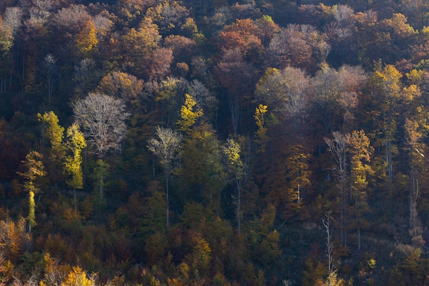 Красочные деревья осенью в горах медведница в загребе, хорватский Бесплатные Фотографии